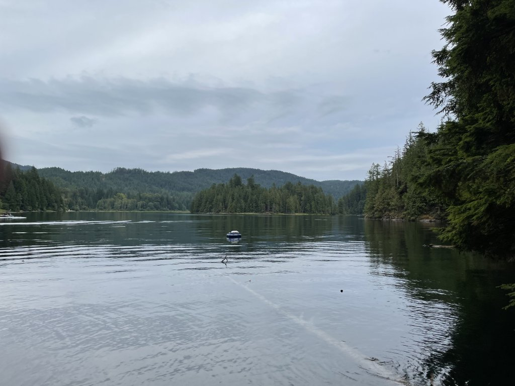A slightly gloomy picture of Weaver Lake from the small dock at the North group site. Trees in the distance, and a felled tree in the lake.